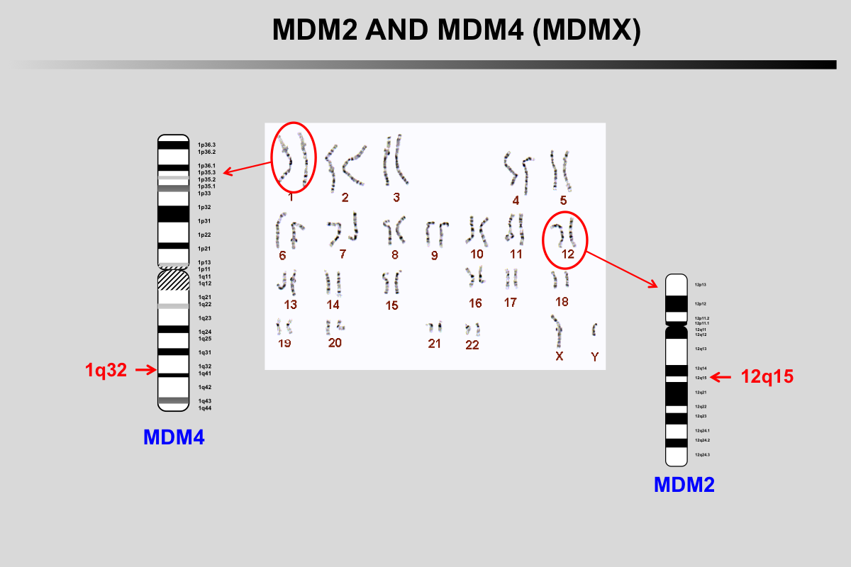 MDM2 and MDMX