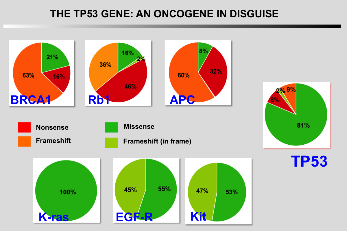 Mutant TP53 an Oncogene!