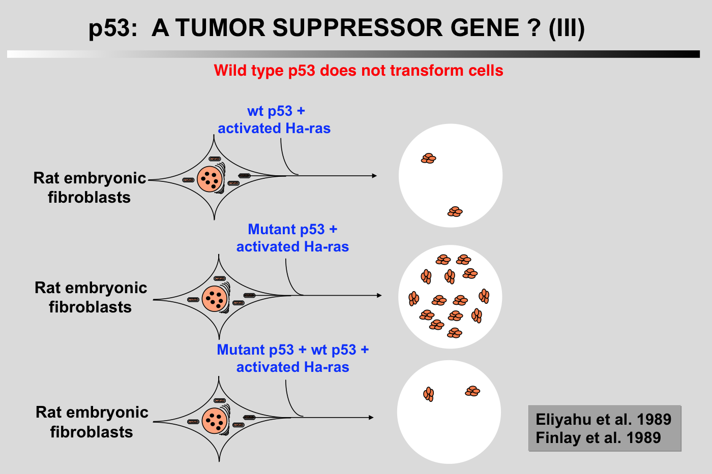 compare and contrast tumor suppressor genes You be able to compare and contrast oncogenes and tumor suppressor genes, and you'll be able to describe how cancer is a genetic disease this lesson will be delivered by dr sarah amend.